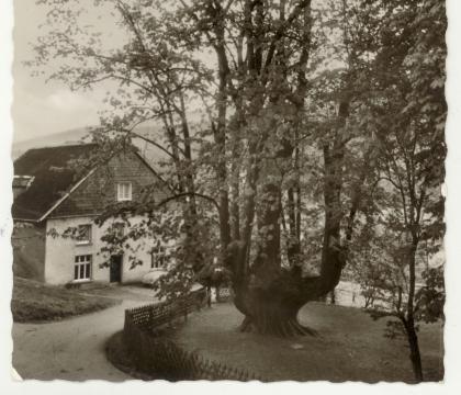 Gasthaus Zur Priorlinde und 1000jährige Kandelaber-Linde